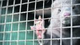 'Right and appropriate' - Irish fur farms to receive funding for wind-down of operations