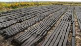 Workable system needed to phase out peat, says Irish horticulture group