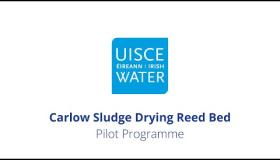 WATCH: Benefits of Irish Water's €800,000 reed beds pilot projects around Carlow