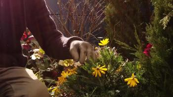 Would you like to feature in a garden design series on RTE?