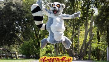 Eagle Athletic Club to run the 2021 Cheetah Run virtually to raise funds for Fota Wildlife Park
