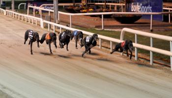 Carlow trainer and owner make Irish Greyhound Derby final