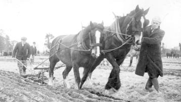 MEMORY LANE: The National Ploughing Championships were very different in the good old days