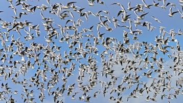 ALERT: Public warned of sharp jump in callouts for pest birds ahead of summer months