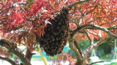 GALLERY: 'They came in and circled,' swarm of bees settle in residential garden in Carlow