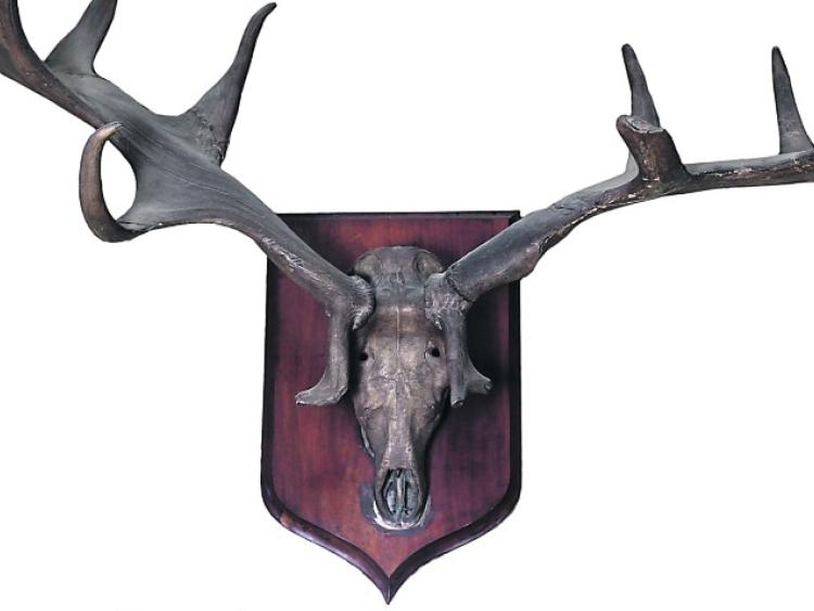 Auction of Milford House contents will see antlers from